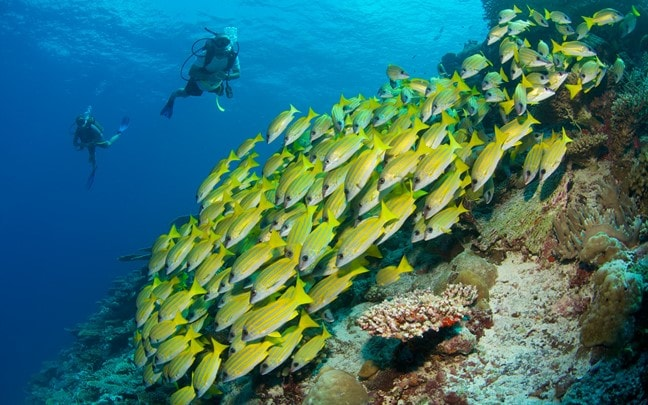 Laamu Maldives Diving