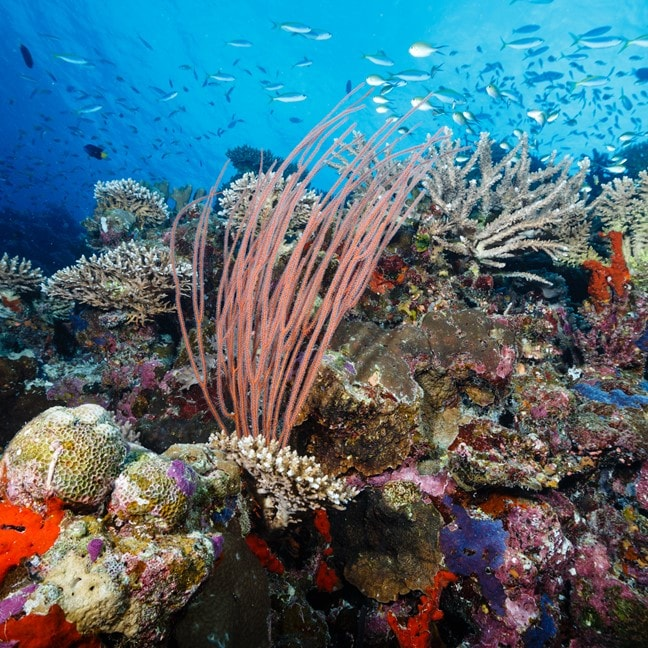 Get involved in coral conservation