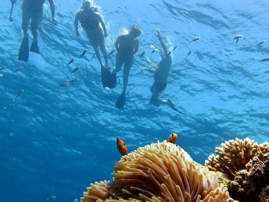 Finding Nemo Guided Snorkeling Adventure