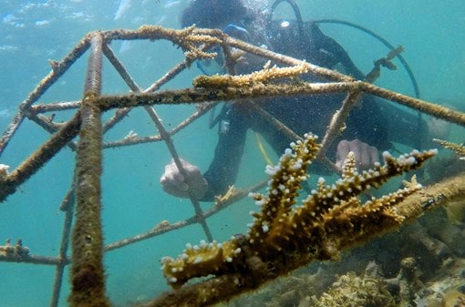 Coral Propagation Program Hires